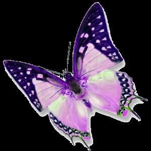 beauty4all.dk sommerfugl logo